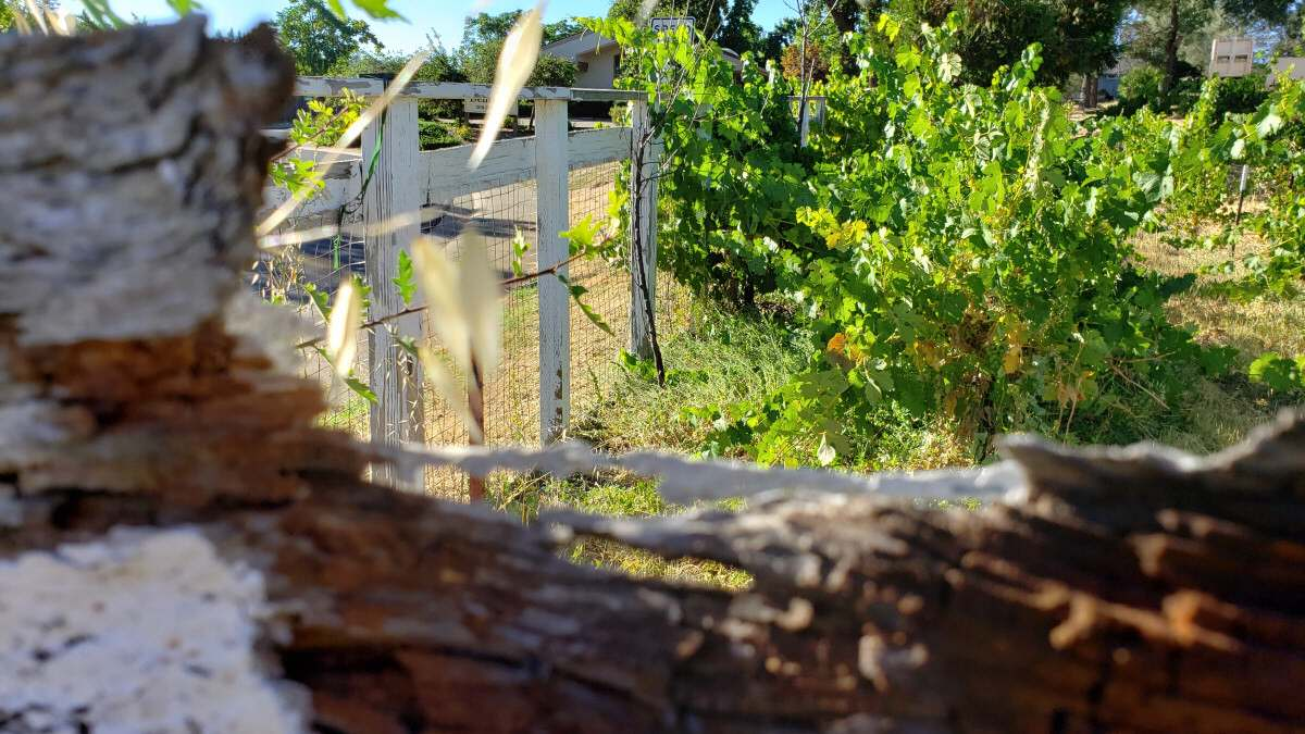 "Deconstruction 2 - ""Old-Fence Gateway to Green"""